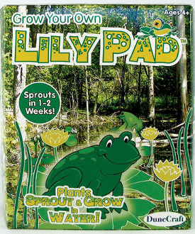 Grow Your Own Lillypad